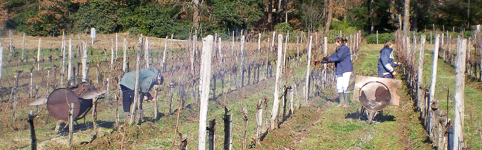vigne-bandeau-2-domaine-le-perrier-500